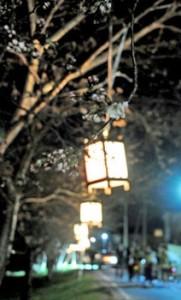 Lanternas enfeitam as cerejeiras em Omihachiman. Foto: Jornal Kyoto