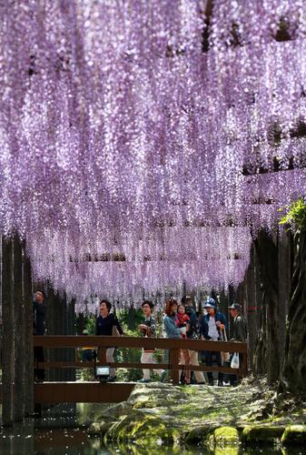 Festival vai até o dia 6 de maio. Foto: Mainichi
