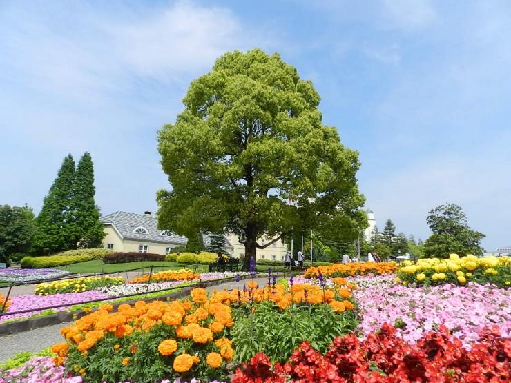 O parque é famoso pelas flores. Foto: kaba118.jugem.jp